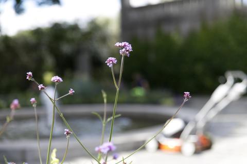 Lukt på blomstene i Vigelandsparken