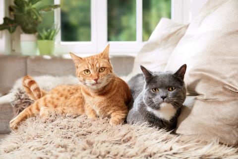 Fressnapf-Tierratgeber 02/2018: So werden Katzen gute Freunde