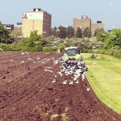 Mer odling i stadsmiljö skapar meningsfull sysselsättning