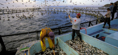 Global Aquaculture Market trends, research, Analysis and projections for 2018-2020