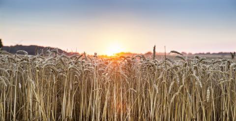 Pressinbjudan: Smartare energianvändning ger lönsammare jordbruk