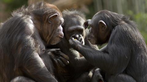 7 eksempler på demokrati fra dyreriget