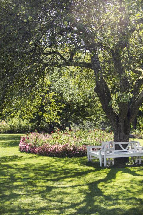 Blommor vid träd med bänk