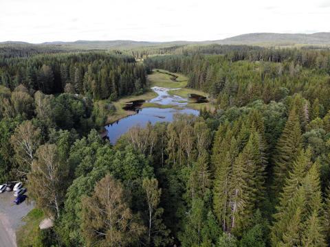 Lankälven i Hällefors kommun blir samarbetspartner i European Rewilding Network