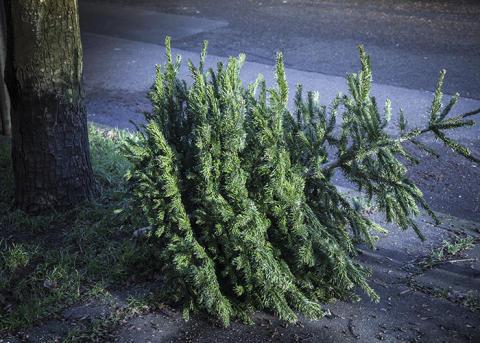 I år värmer din julgran Tranås