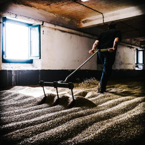 Laphroaig floor malting