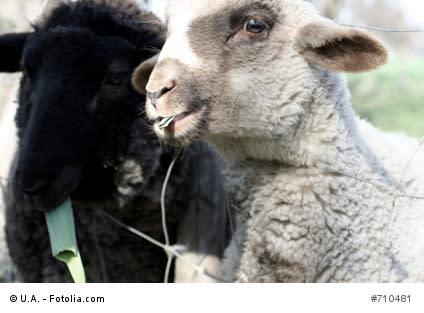 Pitch perfect II - Weißes oder schwarzes Schaf im Pitch sein? // Was Augenhöhe bringen kann