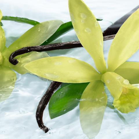 Les Plaisirs Nature Sensual Vanilla