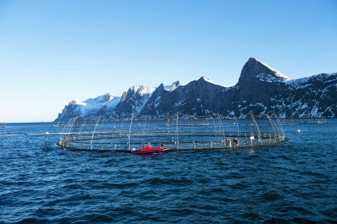 Ocean farming can help preserve global ecosystems
