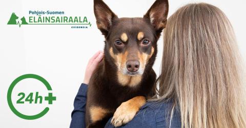 Pohjois-Suomen ensimmäinen 24h päivystävä eläinsairaala Ouluun