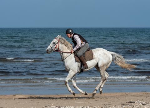 78-åringen som rider sin galopphäst varje dag