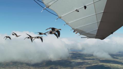 Spread Your Wings Nicolas Vanier Still012
