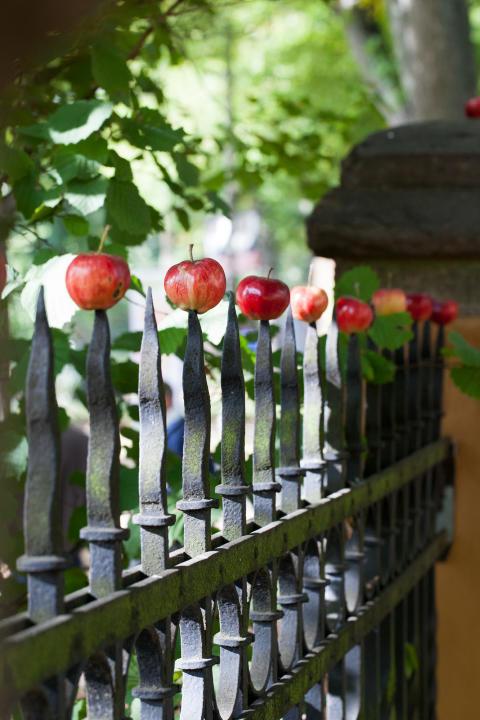 Nordiska museets Äppelfestival