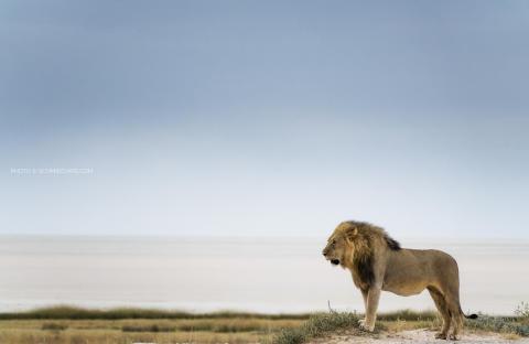 © Chris Schmid_Namibia_RX10 III