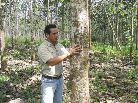 Teakplantagen von Life Forestry als nachhaltiges Investment