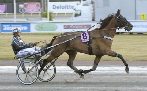 Idag startar röstningen till Årets Häst 2013