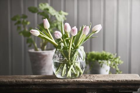 Romantisk lantidyll-  tulpaner i vas