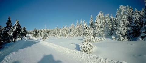 Harz Nasjonalpark