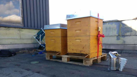 50,000 new employees – bee colonies on the roof