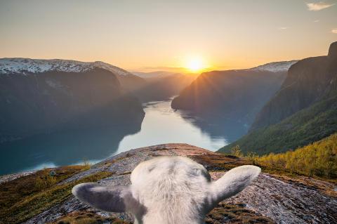Upptäck Norge från ett fårs synvinkel med #sheepwithaview
