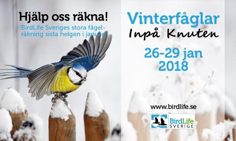BirdLife Sveriges Vinterfåglar Inpå Knuten 26-29 januari 2018