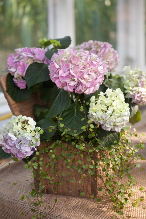 Skön samplantering som fungerar både ute och inne