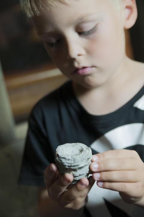 Geologins dag - barn undersöker fossil