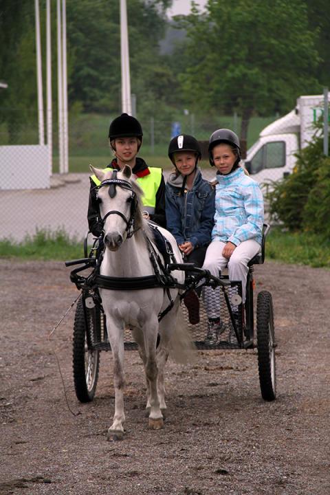 Kaspiska hästar på Täby Galopp