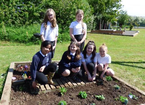 School Growing Club Programme