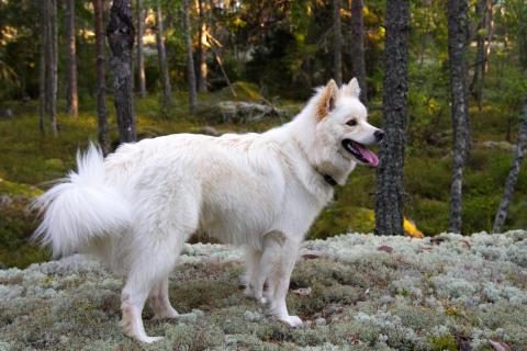 Så tryggar du skogspromenaden med hunden