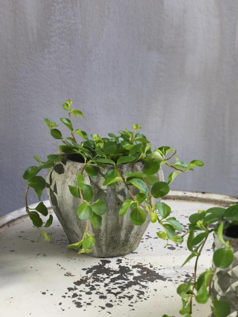 Växttrender 2018