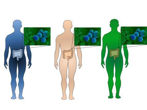 Skillnader i tarmfloran