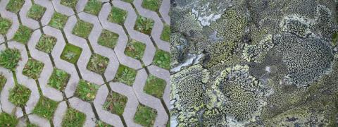 Natur i staden: hur, för vem och till vad? Ny avhandling om relationen mellan natur och stad