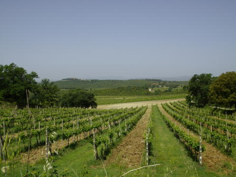 Col d´Orcias vinodlingar i Toscana