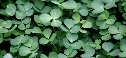 A pot of black gold for Ireland?