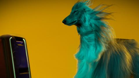 Ya es oficial: los perros prefieren Beyoncé a Beethoven