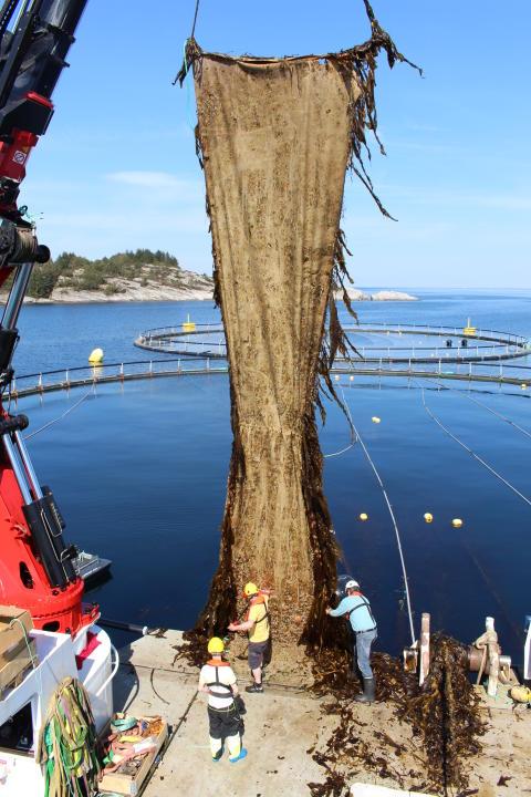 Avfallsstoffer fra fisk er næring for tang og tare som igjen kan brukes om mat både til mennesker og fisk. Drømmen for Lerøy og Ocean Forest-prosjektet er å bli selvforsynt med fiskefôr.