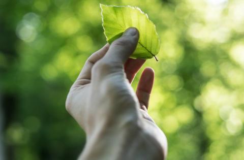 Gröna offerter gav 98 procents effekt