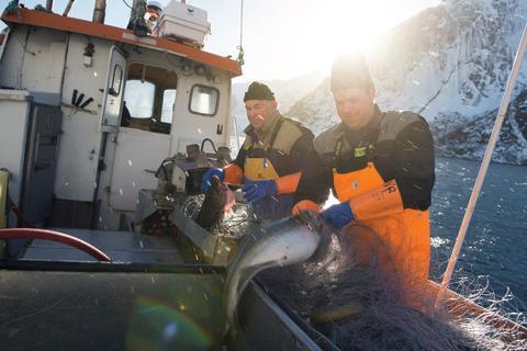 Nachhaltigkeit wird groß geschrieben: die Einhaltung von strengen Fangquoten und der Einsatz von schonenden Fangmethoden sind für die Norweger selbstverständlich. So wie hier beim Skrei, dem norwegisch-artischen Winterkabeljau.