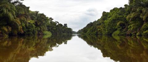 Budskab på COP22: Medregn skovene og glem ikke de oprindelige folk