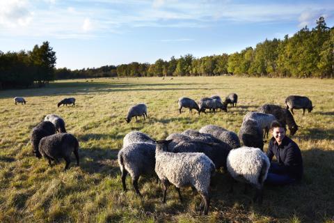 På hösten är lamm som bäst