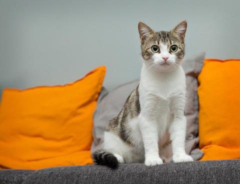 Evidensia ja kissanomistajat yhdessä löytökissojen hyväksi