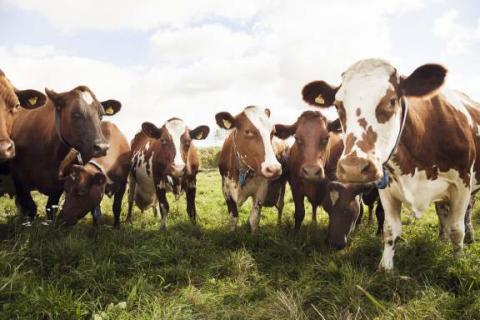 Konsumentval: Ge inte djuren antibiotika i onödan