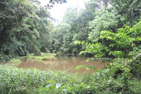 Bäume retten statt Banken - Eine Stellungnahme von Life Forestry