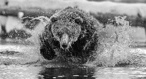 © marko Dimitrijevic, Switzerland, Shortlist, Professional competition, Natural World & Wildlife, 2020 SWPA (3)