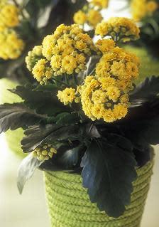 "Blomsterfrämjandet har fått ""Pippi på påsk"""