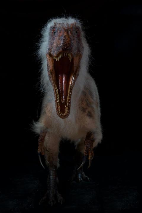 Megalosaurus forfra