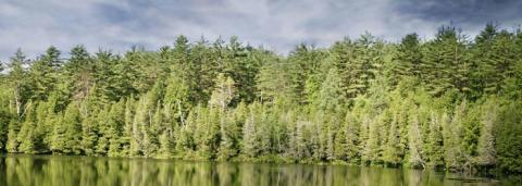 Kraftigt stigande priser på skogsmark i norra Sverige, prisutjämning i södra Sverige