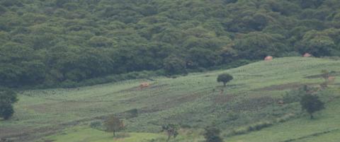 Klimaekspert: Stort forbrug medfører ansvar for skove og klima