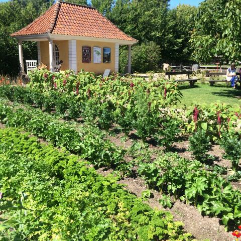 Køkkenhave på Frilandsmuseet